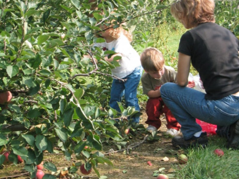 Apple Picking Rhode Island Middletown