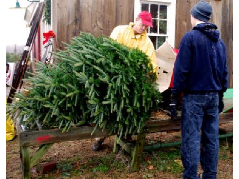 Where You Can Buy Your Christmas Tree Locally - Where You Can Buy Your Christmas Tree Locally Tiverton, RI Patch