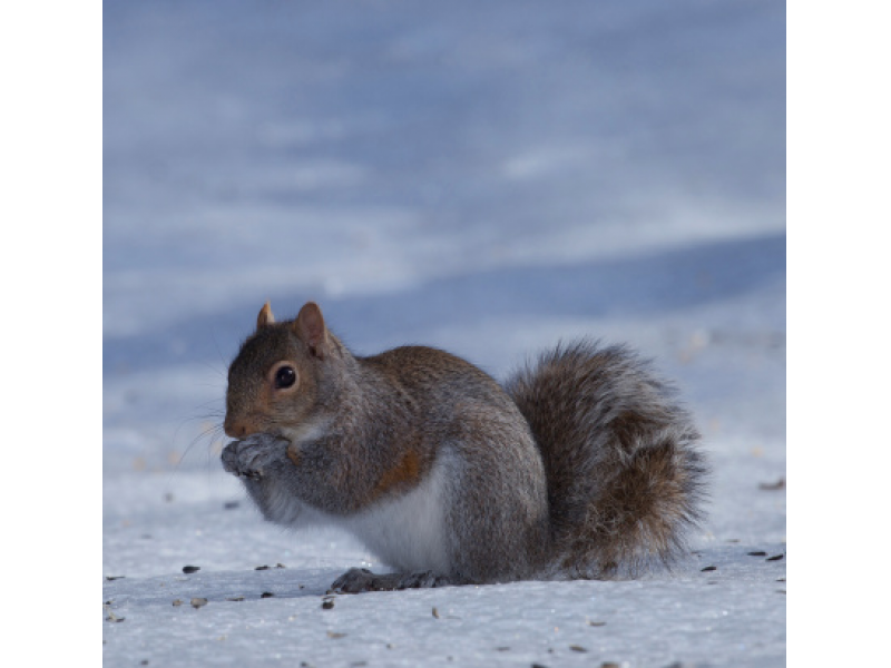 CHILLY WEATHER SENDS RODENTS INDOORS ACROSS U.S. THIS WINTER Horizon ...