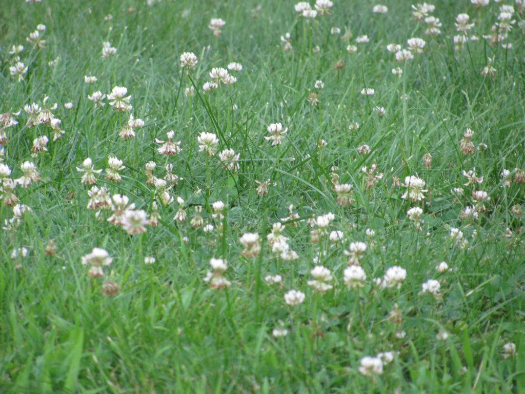 You Can Grow Grass Naturally Barrington Ri Patch