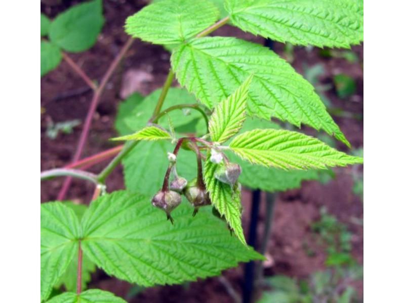 How Does Your Garden Grow?   Montclair, NJ Patch