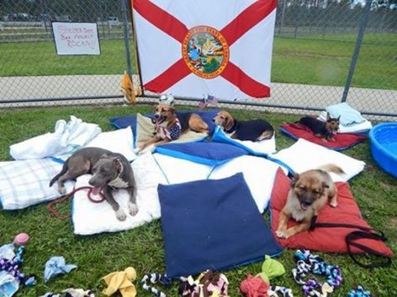 The Shelter Dog Bed Project Will Give Thousands Of Dogs A