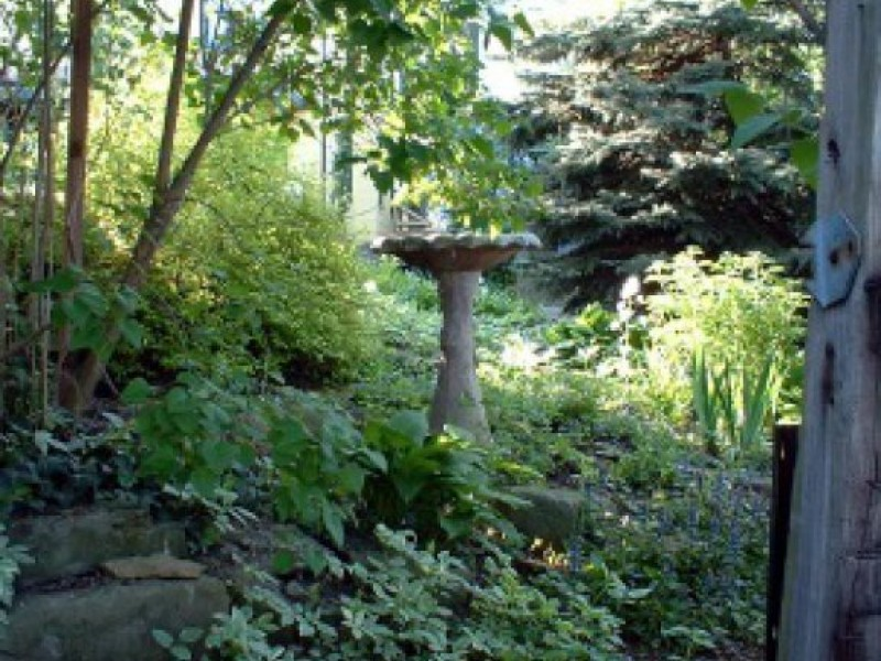 Your Backyard Wildlife Habitat: Begin In Spring To Control Fleas |  Chartiers Valley, PA Patch