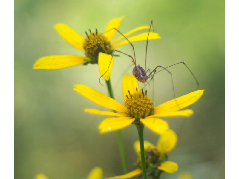 ... Your Backyard Wildlife Habitat: Begin In Spring To Control Fleas 0 ...