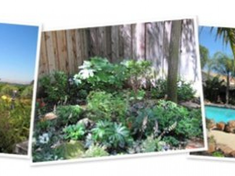Clayton Gardens Tour | Concord, CA Patch