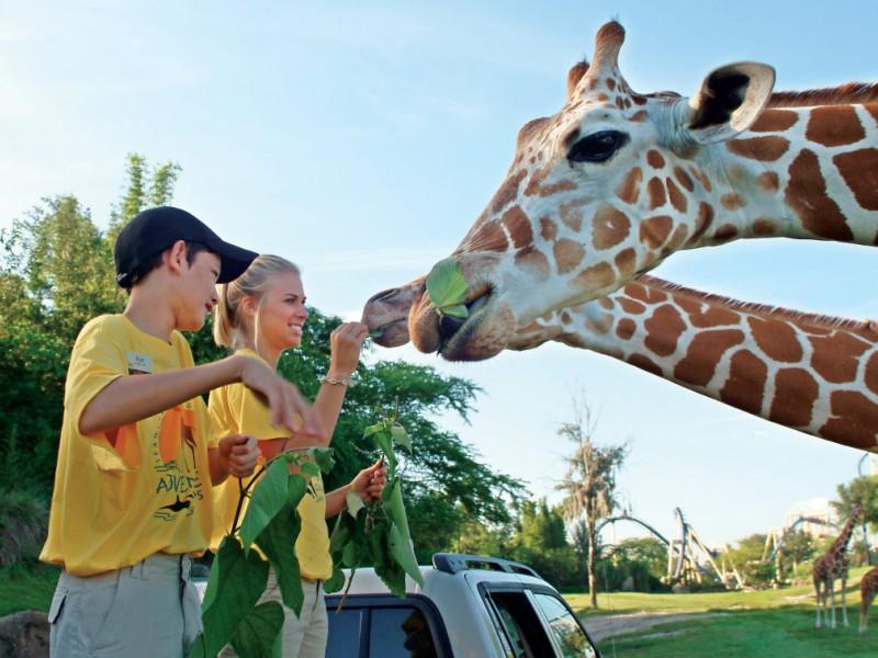 Busch Gardens Summer Camps Benefit Animals Kids New Tampa FL Patch