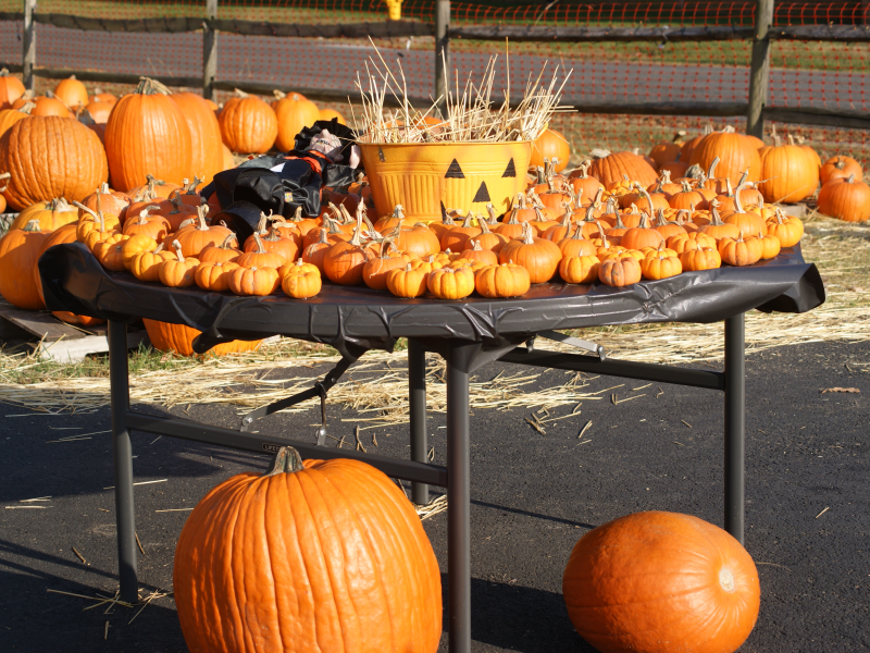 pumpkin patch near me woodbridge va