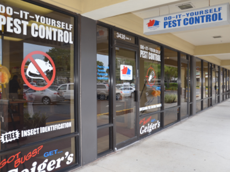 Bed bug zapper and more at new diy pest control store palm harbor bed bug zapper and more at new diy pest control store palm harbor fl patch solutioingenieria Image collections