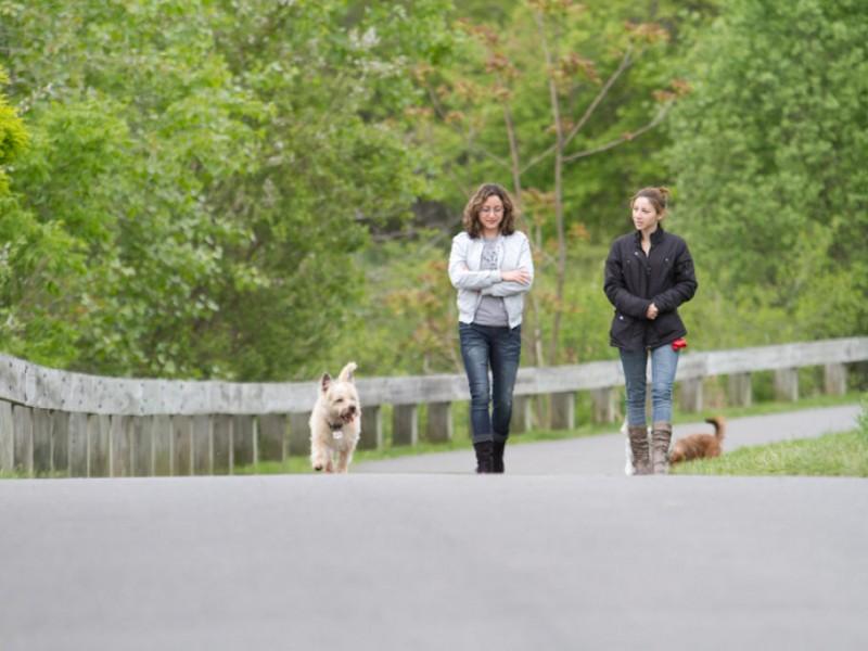 Dog Park Brookline Massachusetts