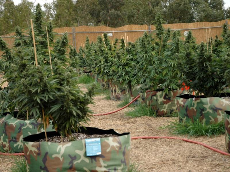 Medical Marijuana Patient Registry Begins in NJ ...