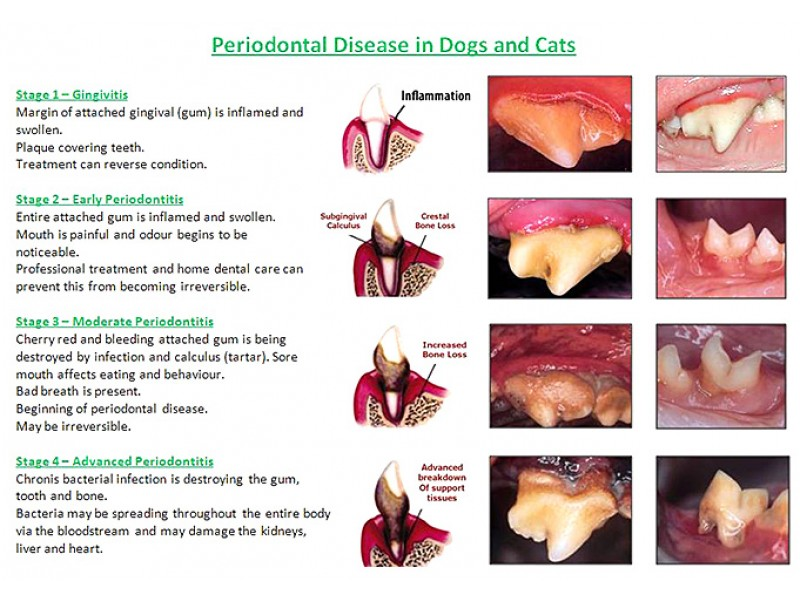 100 Off Your Fur Kids Dental Cleaning Roswell Ga Patch