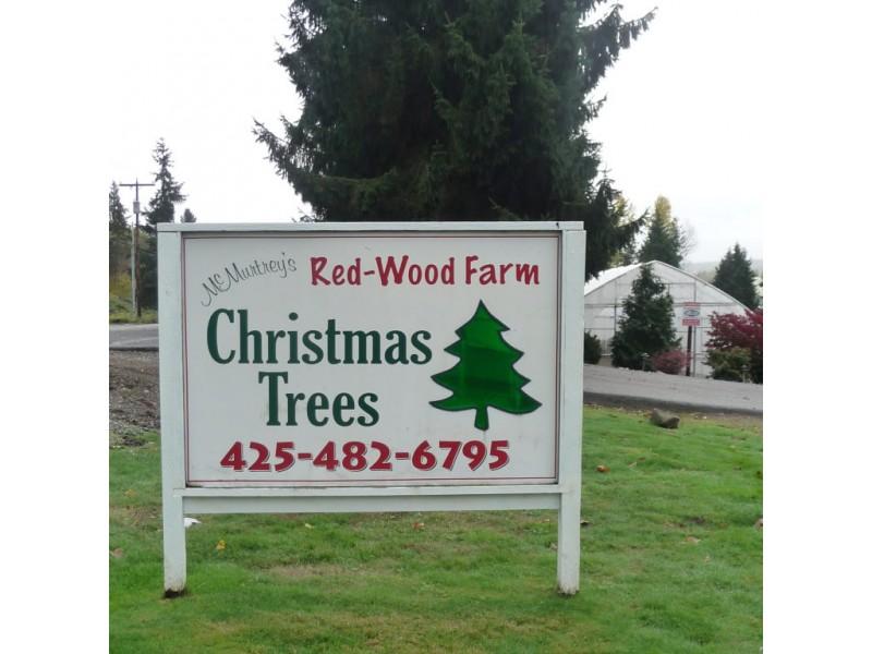 Sammamish Valley Farm a Local Christmas Tree Tradition | Kirkland ...
