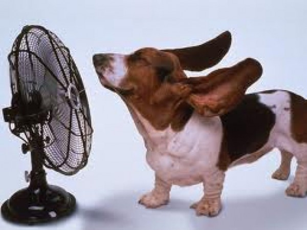 Another Tip on Keeping Cool Before You Call the A/C Guy- Check the Batteries in Your Programable Thermostat.