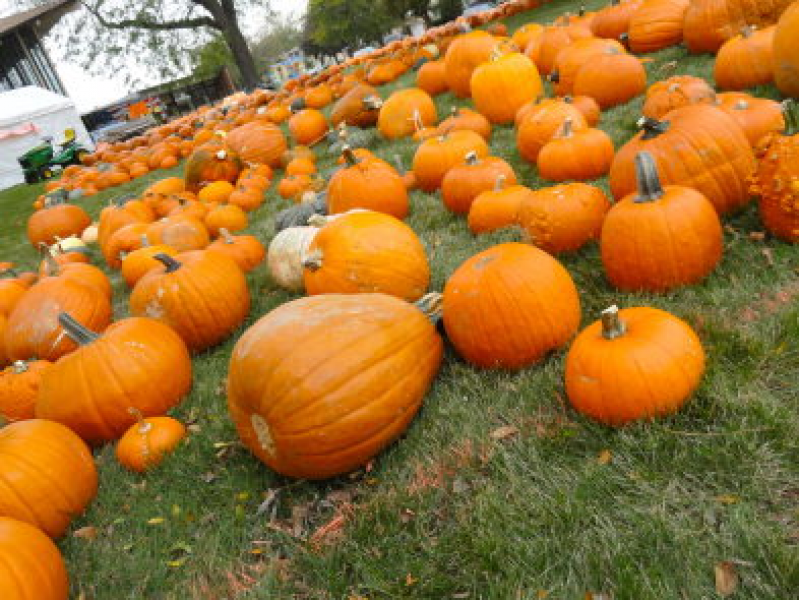 Illinois pumpkin patches, corn mazes, hayrides and more find.