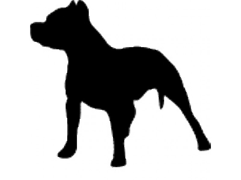 pit bull s fate lies in courts after mauling alsip boy oak lawn rh patch com pitbull clip art free tribal pit bull clip art black and white