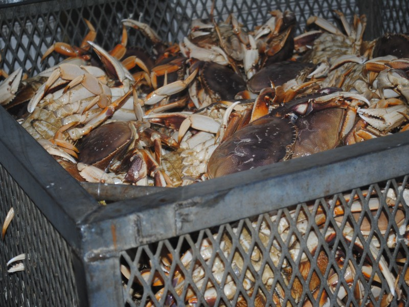 39 tis the season for crabbing q and a half moon bay ca patch for Crab fishing game