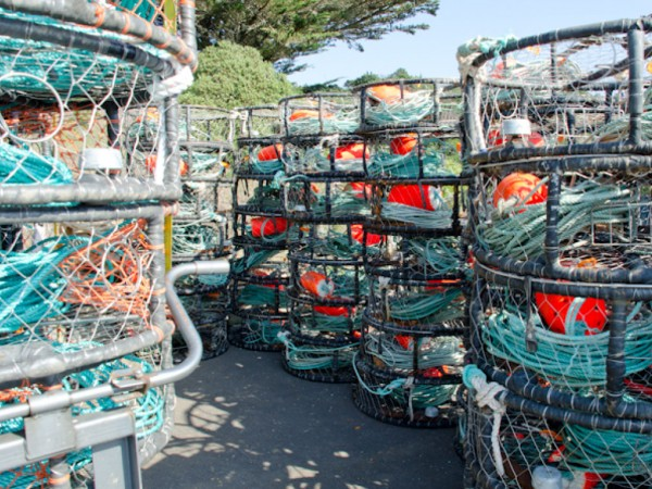 New rules for crab season opener pacifica ca patch for California fish and game regulations