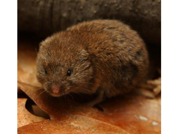 HOW TO GET RID OF MOLES IN YOUR YARD GUARANTEED METHOD