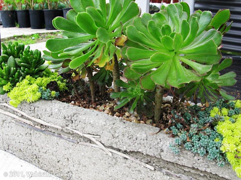 Vertical Garden Guru: Georgeu0027s Fortier Fantastic Botanical Creations |  Encinitas, CA Patch