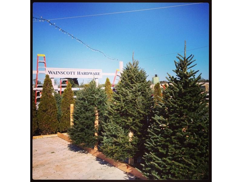 where to buy a christmas tree in east hampton town - Where To Buy A Christmas Tree