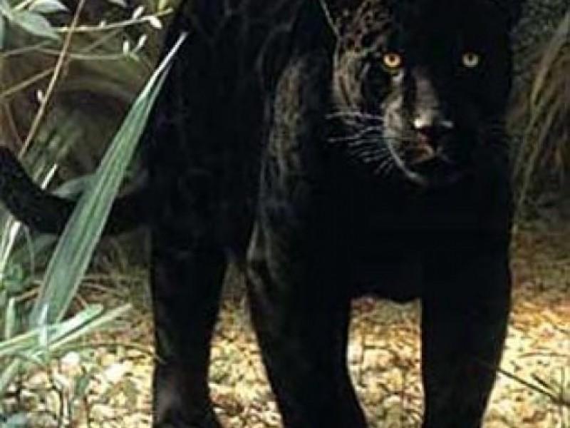 Black Cats In Georgia