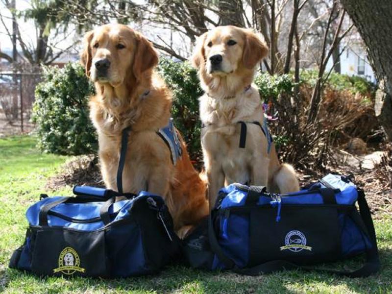 harper college offers comfort dog handling certification | vernon ...