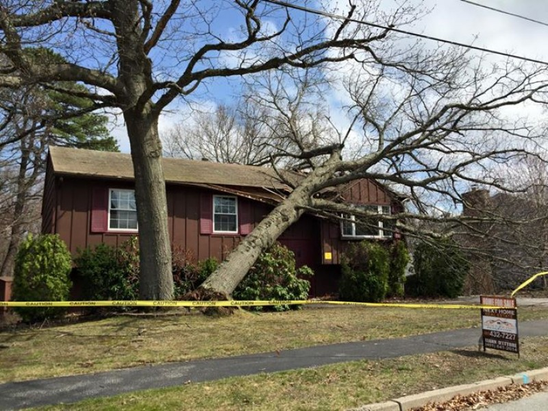 Tree falls on house in cranston cranston ri patch - Restaurants in garden city cranston ri ...