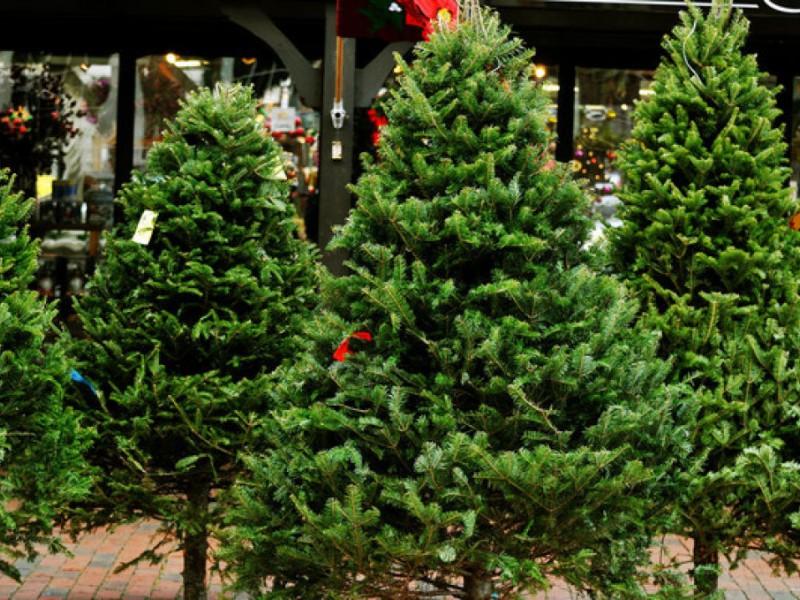Where To Buy A Christmas Tree Around Newton