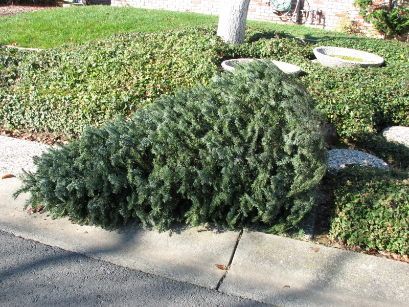 Waste Management Holiday Pickup Schedule/Tree Recycling