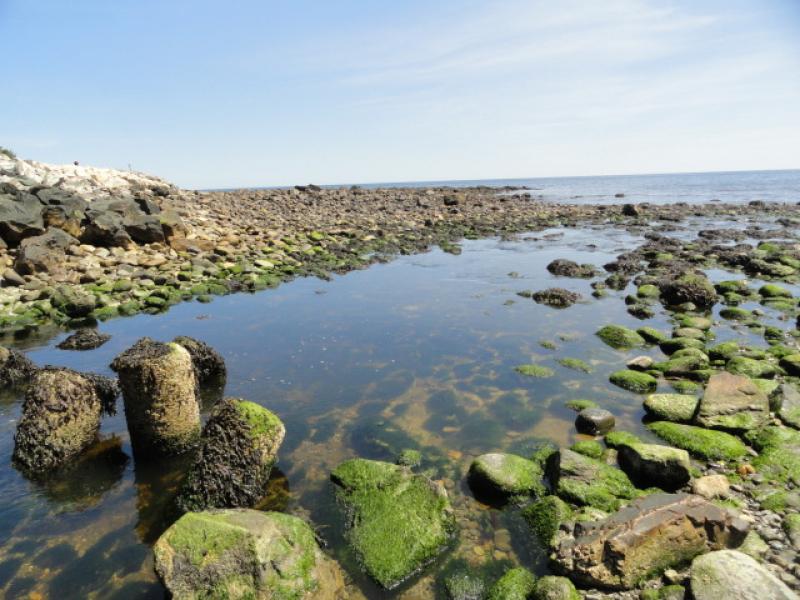 Rye Beach Tide Pools Best Beach In The World 2017