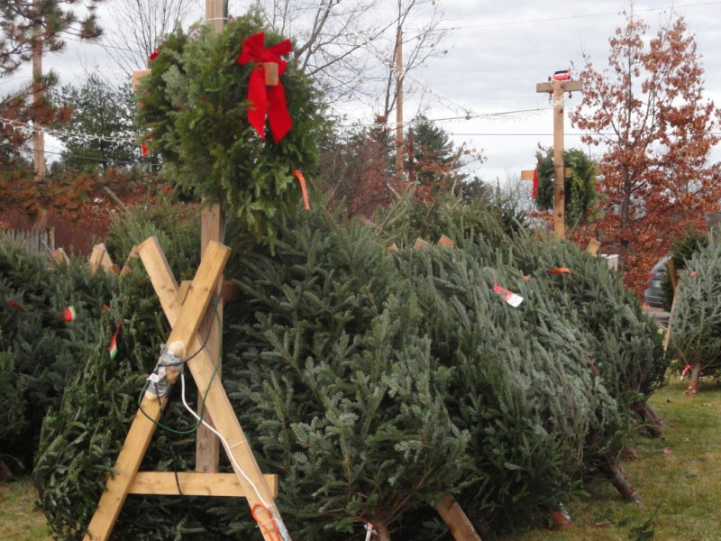 Massachusetts Christmas Tree Farms