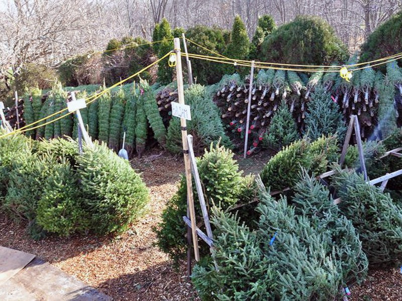 Where to Pick Up a Christmas Tree | East Hanover, NJ Patch