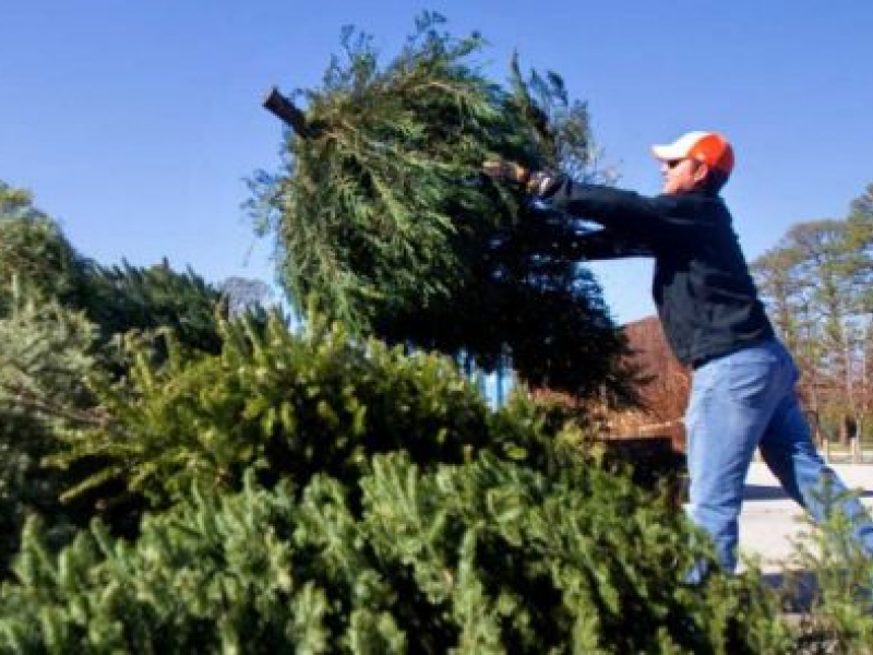 Christmas Tree Recycling Locations in Lake County