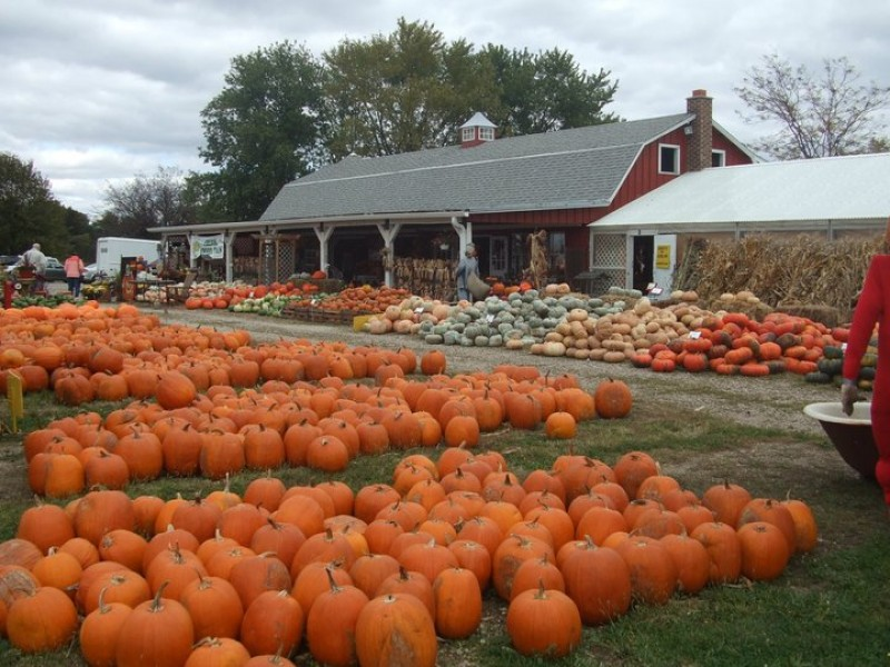 the big list of pumpkin patches