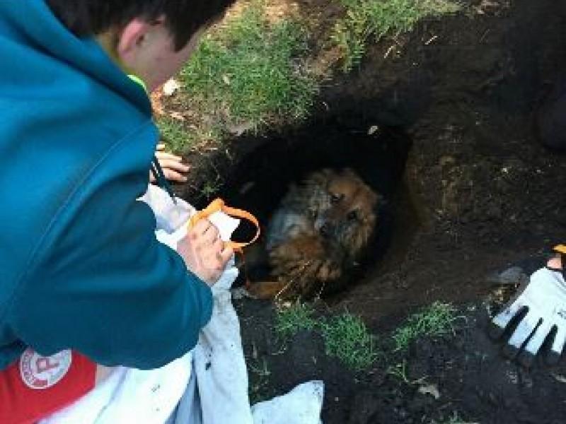 Street Dog Rescue Illinois