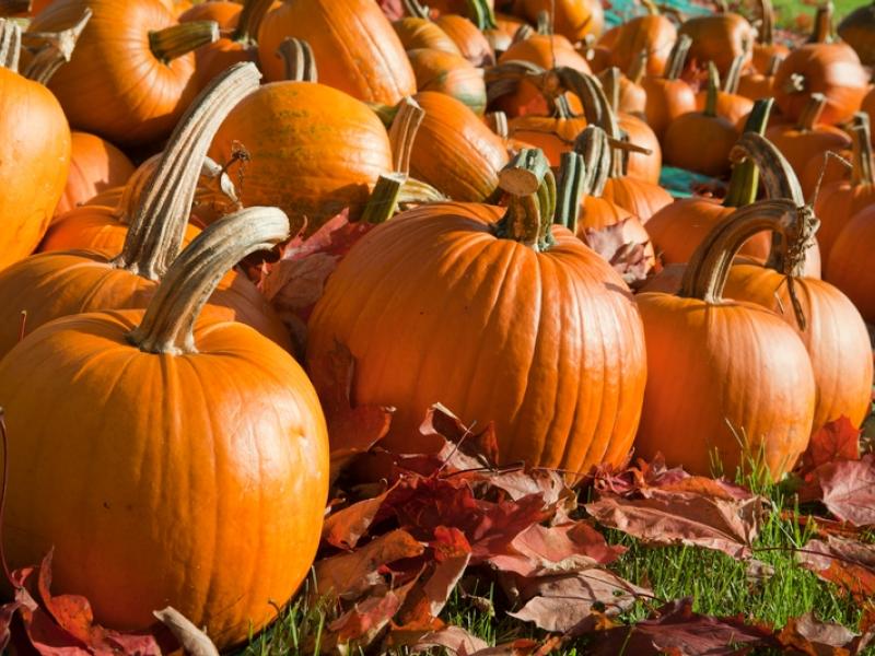 Pumpkin patches near woodbridge virginia 2015.