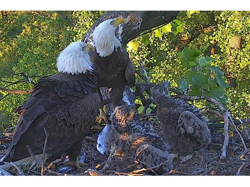 Dc Bald Eagle Chicks Named Gun Shop Sues Protesters -8191
