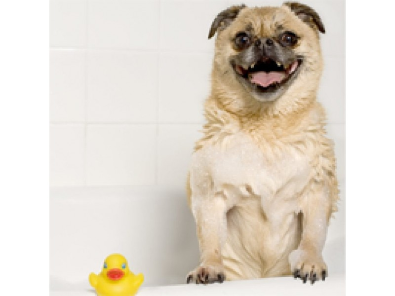 How To Keep A Home Smelling Good When Youre A PetLoving Household - How to keep bathroom smelling good