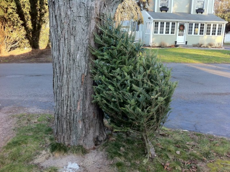 Christmas Tree Recycling in Columbia Wraps Up This Week | Columbia ...