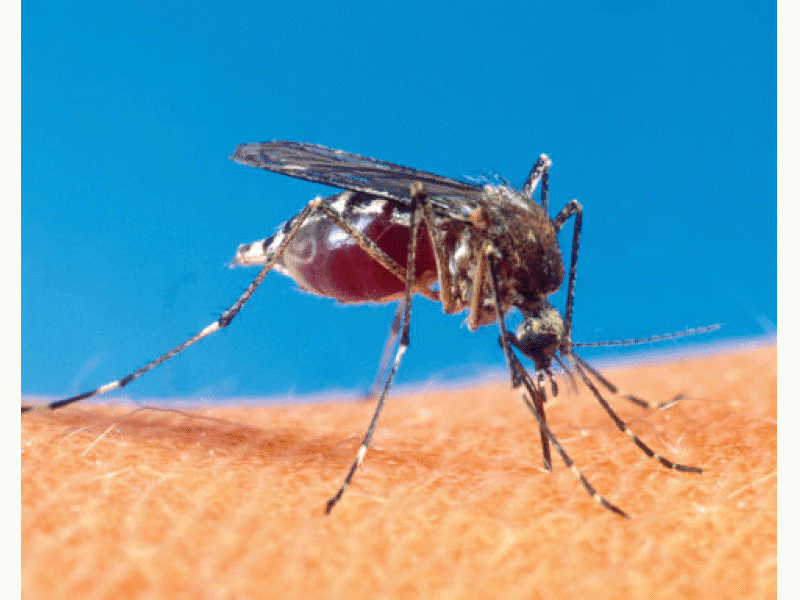 Four More Mosquito Samples Test Positive For West Nile in Suffolk - West Islip, NY Patch Four More Mosquito Samples Test Positive For West Nile in Suffolk - 웹
