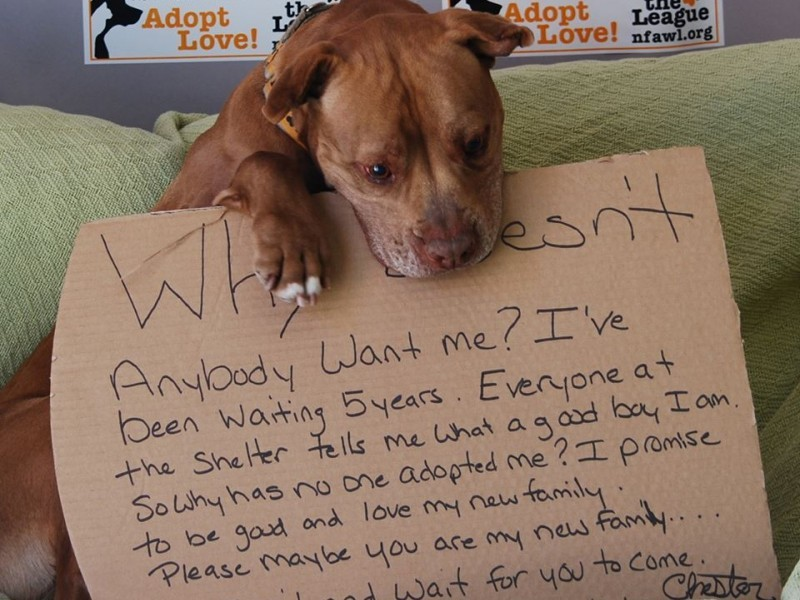 adorable internet campaign finds dog new home ivy league whiz kid