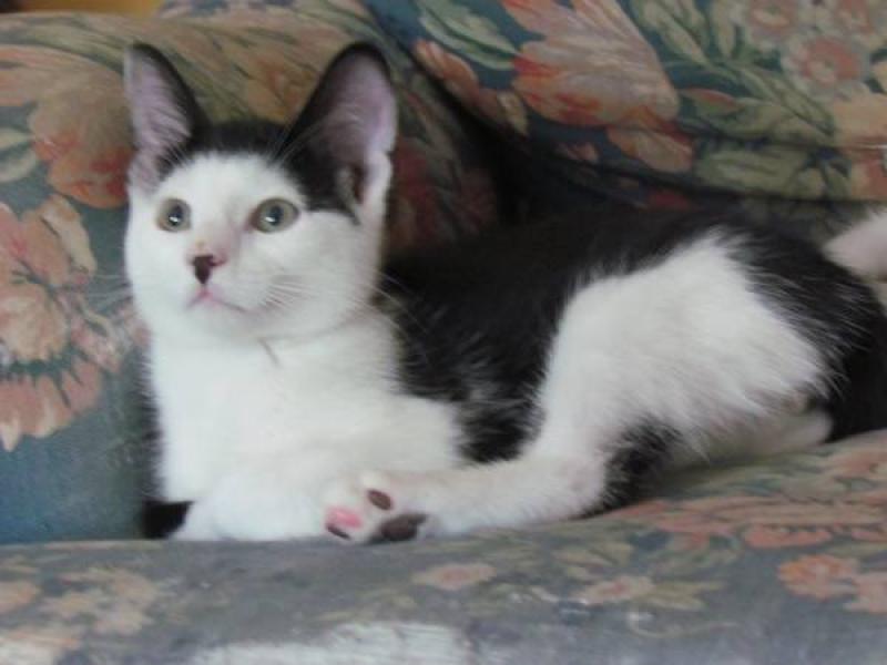 Craigslist Omaha Pets Www Salvuccissd Com
