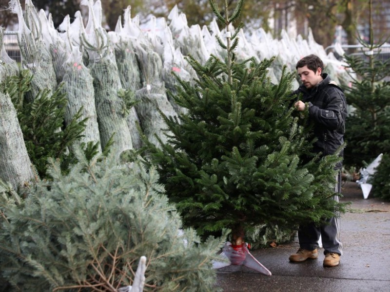 Christmas Trees, Another Reason To Buy Local
