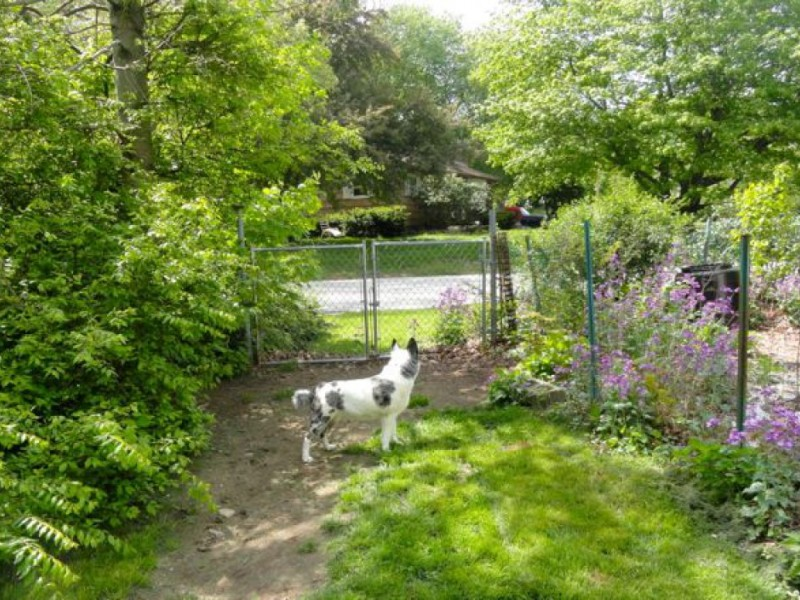 German Shepherd Kills Papillon; Everyone Mourns | Montville, CT Patch