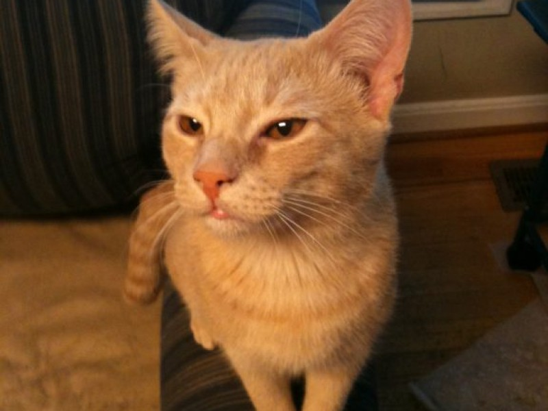A Christmas Reunion With Sunny the Cat - Severna Park, MD Patch
