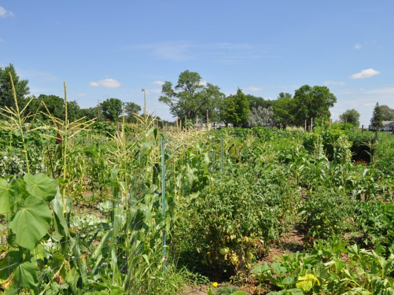 Richfield Community Gardens Thrive—Just Not in City Limits ...