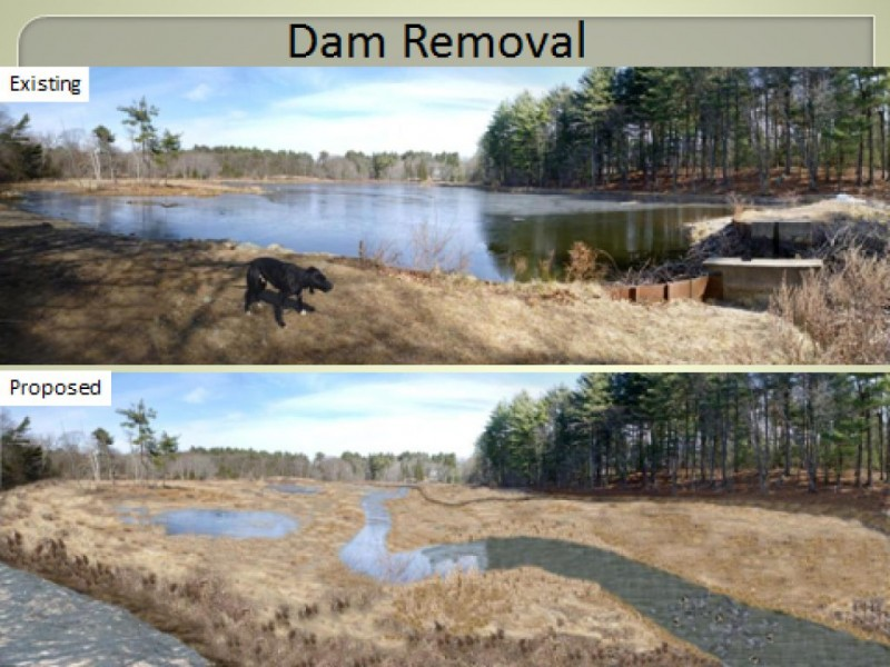 Future of weston 39 s hobbs pond dam debated weston ma patch for Small pond dam design