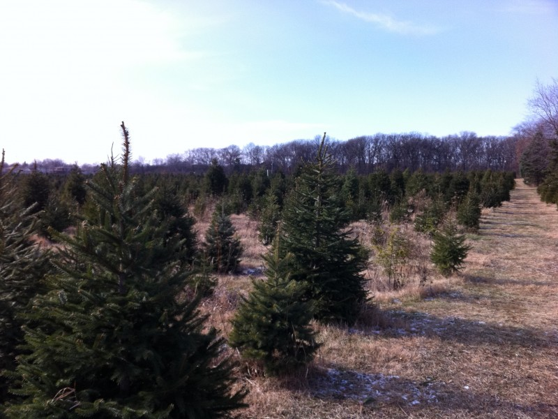 Ide Christmas Tree Farm Opens Friday
