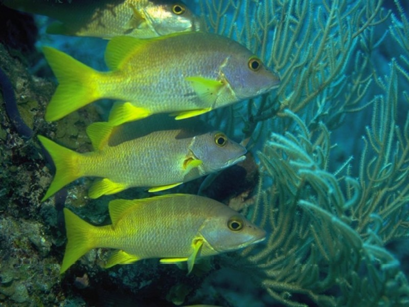 Tropical Island Beach Ambience Sound: Tropical Reef Fish Visit Long Island Sound