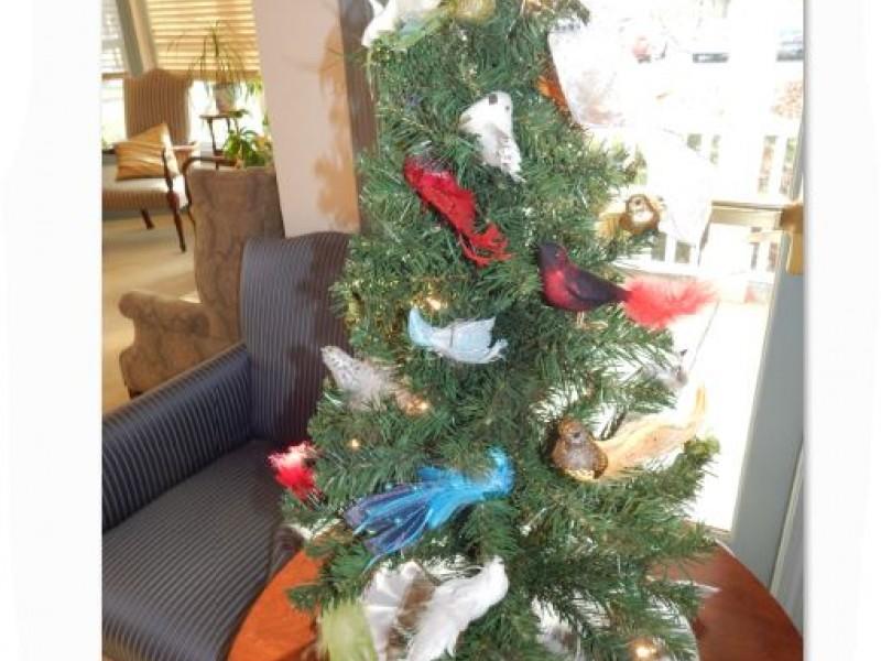Christmas Tree Natick Ma
